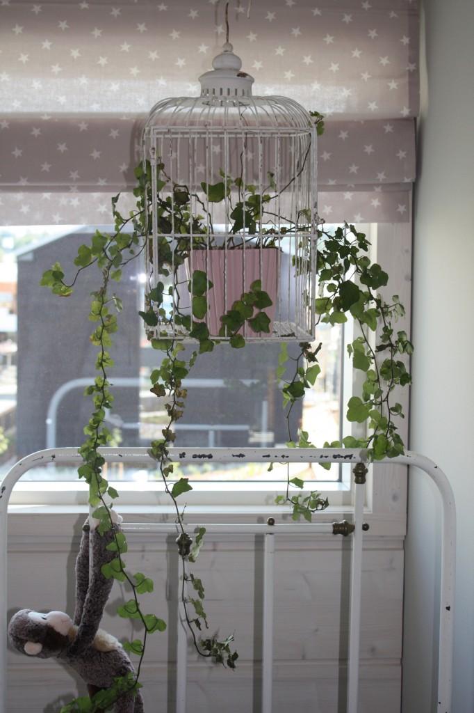 Talo 2 - Cube 170  Hauska yksityiskohta. Lintuhäkki + kasvi.